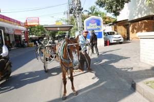 インドネシア、バリ、クタ、馬