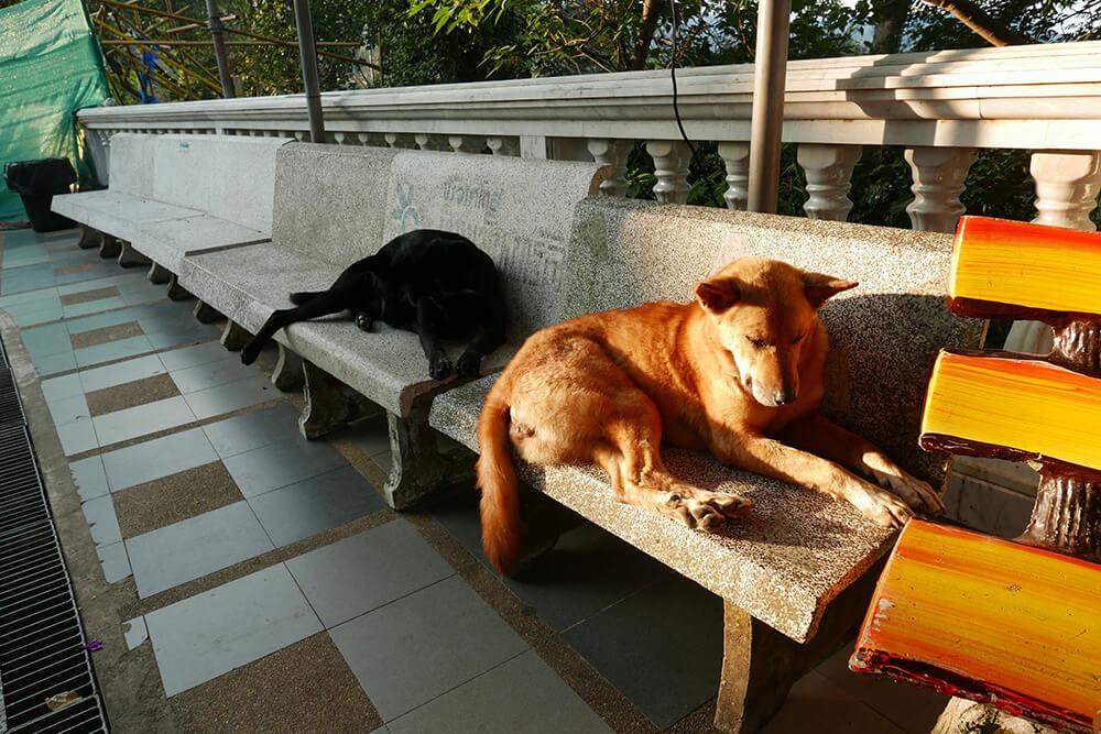 ワット・プラタート・ドイ・ステープ Wat Phra That Doi Suthep門番の犬