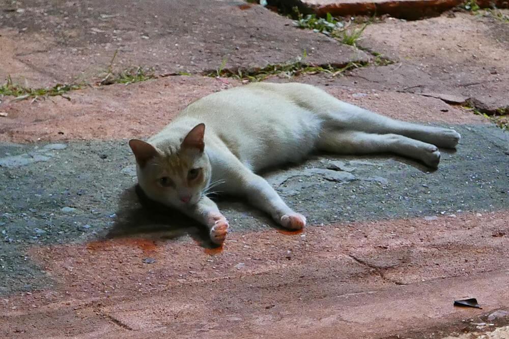 バンコク・バンカピ宿泊先の周辺にいた猫
