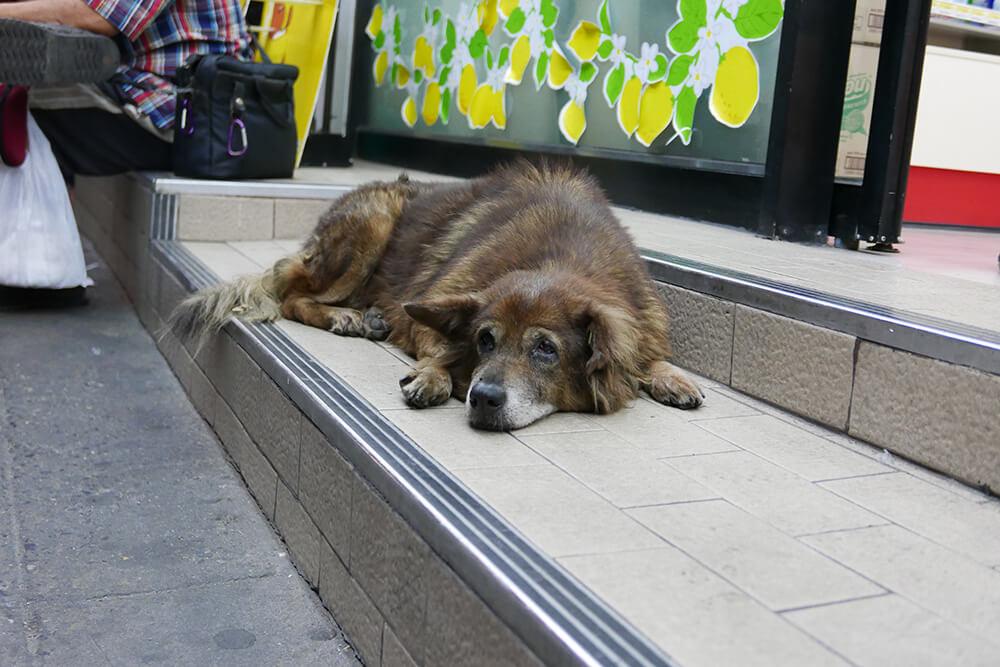 バンコク・バンカピ宿泊先の周辺にいた犬