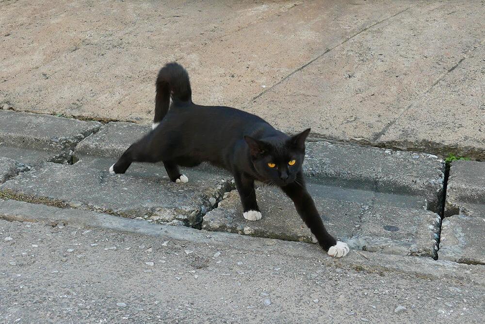 靴下はいてる様に見える猫