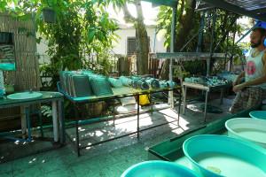 ベジタリアン ソサエティー(Vegetarian society)食器洗い場