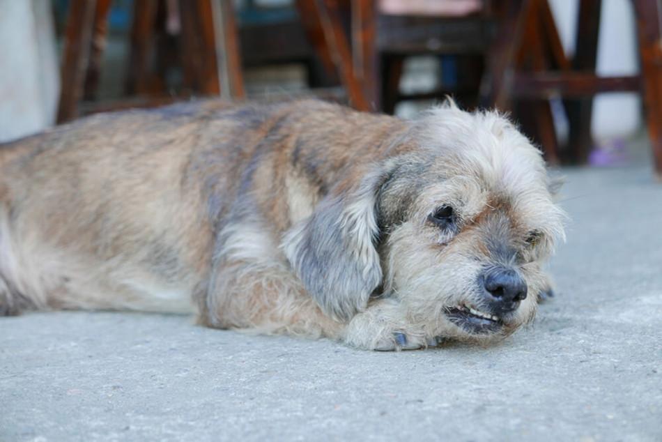 世界一周の旅で訪れたタイにいた犬
