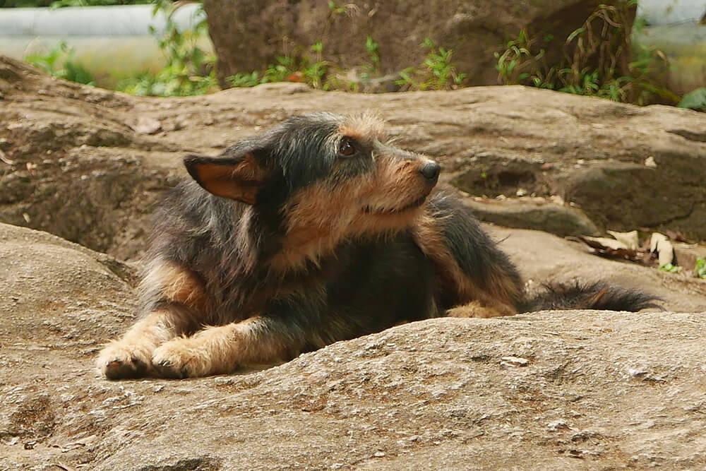 メーサー滝にいた犬