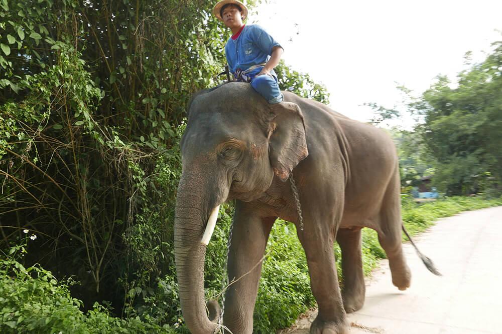 象使いと象