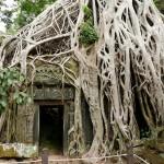 巨樹と一体化した遺跡〜世界遺産タ・プローム〜