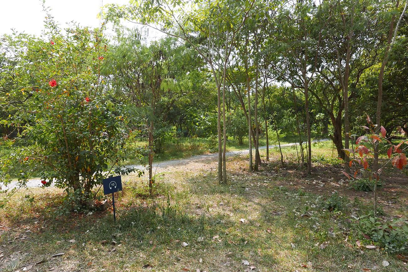 キリングフィールド・ロンガンの果樹園